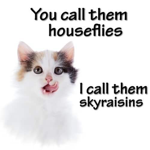 I call them skyraisins