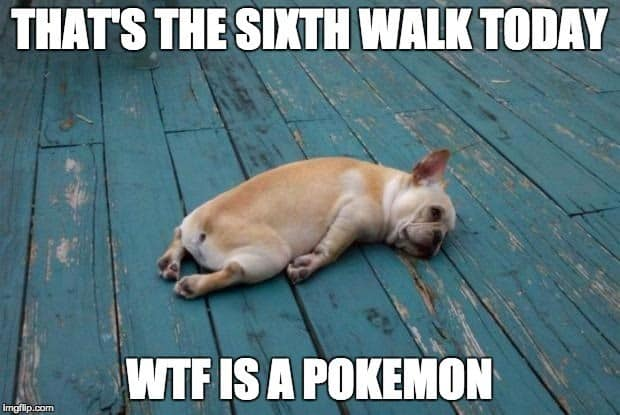 That's the sixth walk today. WTF is a Pokemon?